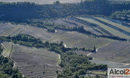 El Consell reforça la informació sobre la Xylella fastidiosa entre el sector agrari