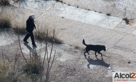 Podem denuncia nous casos d'enverinament de gossos a Alcoi