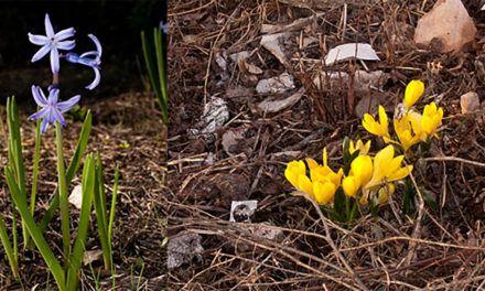 Identificades a Alcoi dues espècies florals noves a la província