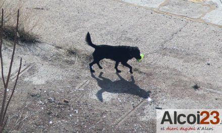 Podem Alcoi presenta al proper ple una moció pel benestar animal i la condemna del maltractament