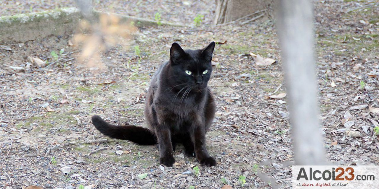 Alcoi rep més de 10.000 euros per al control de les colònies de gats